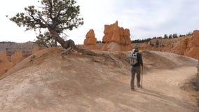 De actieve Wandelaarmens beklimt een Route dichtbij de Rotsmuur van Bryce Canyon stock footage