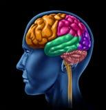 De activiteitenintelligentie van hersenen Stock Afbeeldingen