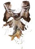 De adelaar ving de vissen Het Schilderen van de waterverf royalty-vrije illustratie