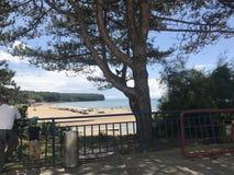 De adelaarszitting bij de pijnboom op het strand dichtbij stad stock foto's