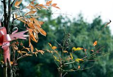 De adem van de herfst Stock Foto