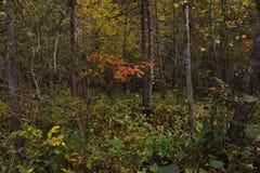 De adem van de herfst Stock Fotografie