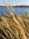 De adem van de herfst in het gras stock foto