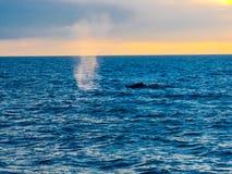 De ademhaling en de slag van de gebocheldewalvis water in de lucht royalty-vrije stock foto