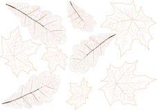 De aders van achtergrond bladeren illustratie royalty-vrije illustratie