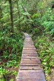 De afgezonderde weg van de regenwoudpromenade stock foto