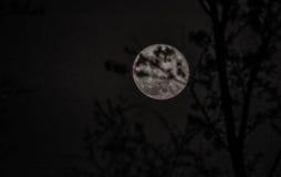 De afnemende gibbous maan van april Stock Afbeeldingen