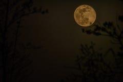 De afnemende gibbous maan van april Stock Foto