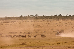 De Afrikaanse Jeep van de Safari Royalty-vrije Stock Foto's