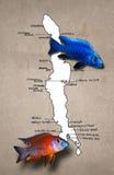 De Afrikaanse kaart van meerMalawi Stock Afbeeldingen