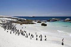 De Afrikaanse Kolonie van de Domoorpinguïn door het Strand Stock Afbeelding