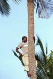De Afrikaanse mens, ongeveer 25 jaar oud, beklom een palm. Stock Foto