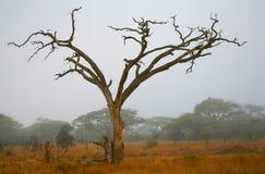 De Afrikaanse Vorm van de Boom Stock Afbeelding