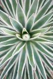 De agave van de woestijntuin royalty-vrije stock foto's