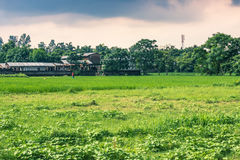 25 de agosto de 2014 - campo rural de Sauraha, Nepal Imagens de Stock Royalty Free