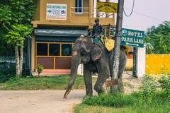 25 de agosto de 2014 - equipe a montada de um elefante em Sauraha, Nepal Imagens de Stock