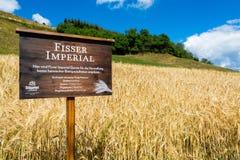 15 de agosto de 2018, Fiss Áustria: Campo imperial da cevada de Fisser fotografia de stock royalty free
