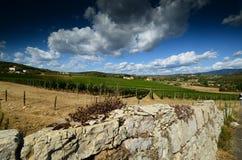 12 de agosto de 2017: parede de pedra e um vinhedo bonito no fundo com céu azul Localizado perto de San Donato Village Florence Imagens de Stock Royalty Free
