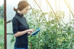 De agronoom die van de vrouwenspecialist een tablet houden Milieuvriendelijke productie op landbouwbedrijven stock foto's