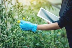 De agronoom die van de vrouwenspecialist een tablet houden Milieuvriendelijke productie op landbouwbedrijven royalty-vrije stock afbeeldingen