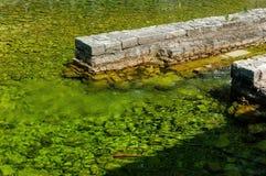De agua dulce uniéndose al mar Imagen de archivo