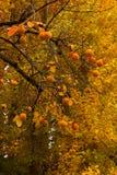 De Alhambra bomen van de herfst stock foto's