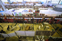 14de alle-Russische Landbouwtentoonstelling Gouden herfst-2012 Stock Foto's