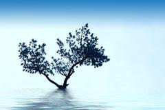 De alleen boom groeit royalty-vrije stock afbeeldingen