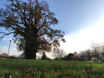 De alleen boom van de tribune stock foto