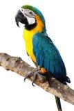 Kleurrijke papegaai royalty-vrije stock afbeelding