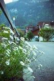 In de Alpen stock afbeeldingen
