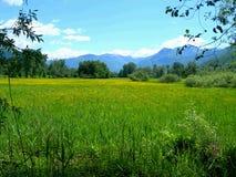 De Alpen en de weiden van Switss royalty-vrije stock foto