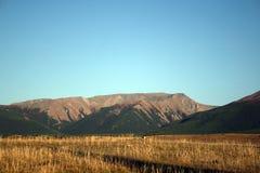 De Altai glaciärerna Royaltyfria Foton