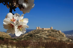 De amandel bloeit en Spaans kasteel op achtergrond stock afbeelding