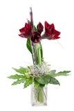 De amaryllis van Kerstmis Royalty-vrije Stock Afbeeldingen
