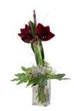 De amaryllis van Kerstmis Royalty-vrije Stock Fotografie