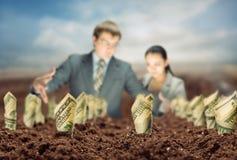 De Amerikaanse dollars groeien van de grond Royalty-vrije Stock Foto's