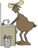 De Amerikaanse eland die van hem wassen dient een gootsteen in Stock Foto