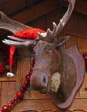 De Amerikaanse elanden van Kerstmis Royalty-vrije Stock Afbeeldingen