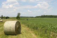 De Amerikaanse Landbouw royalty-vrije stock foto