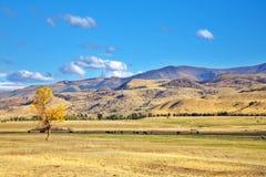 De Amerikaanse prairie in duidelijke dag Royalty-vrije Stock Foto's