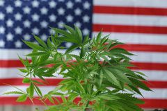 De Amerikaanse vlag van de cannabis cbd marihuana stock foto
