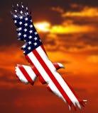De Amerikaanse vlag van de Adelaar Royalty-vrije Stock Afbeeldingen