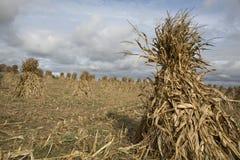 De Amishlandbouwbedrijven brengen in de herfst oogst stock fotografie