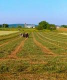 De Amishmens en een team van vier paarden ploegt een luzernegebied stock fotografie