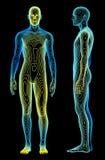 De Analyse van het lichaam vector illustratie
