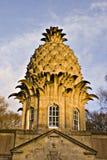 De ananas Stock Fotografie