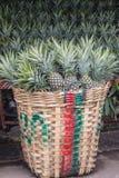 De Ananas in de markt wordt verkocht die Stock Fotografie