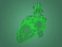 De anatomie van het röntgenstraalhart Royalty-vrije Stock Afbeeldingen