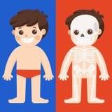 De anatomievector van het jong geitjelichaam Menselijk skeletdeel stock illustratie